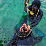 Deniz Patlıcanı Avcılığı